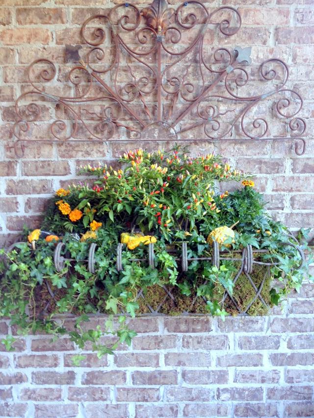 provironflowers