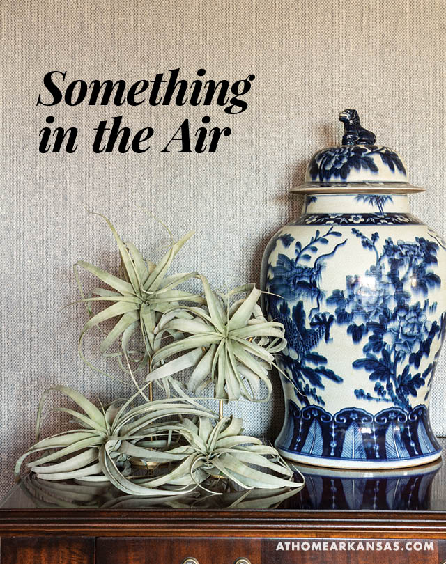 Something in the Air | At Home in Arkansas | Jan/Feb 2016