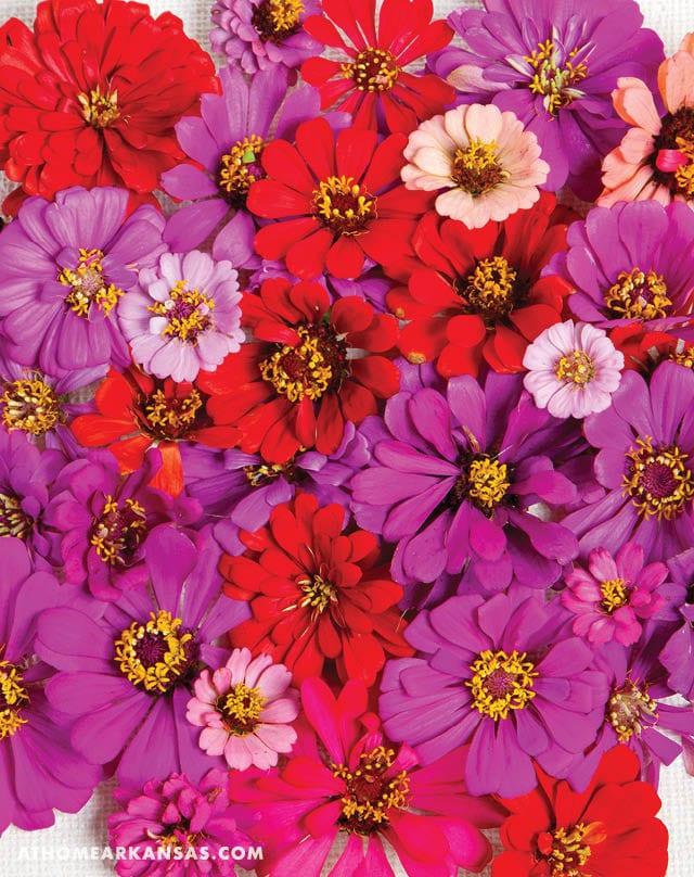 Beautiful Fall Blooms | At Home in Arkansas | September 2016